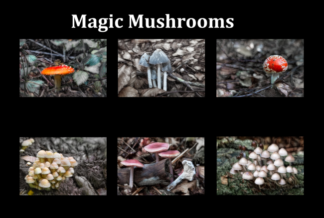 Magic Mushrooms  00  IDN0262101-GRB
